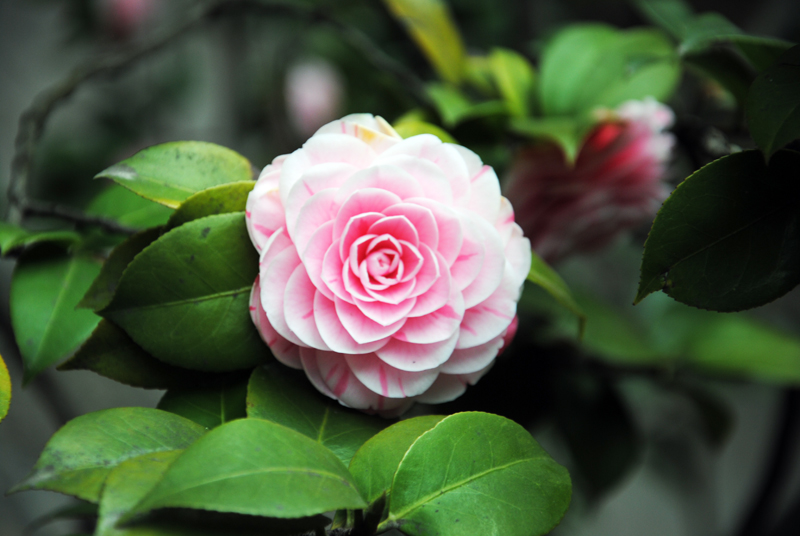 shanghai-flower-yu-garden
