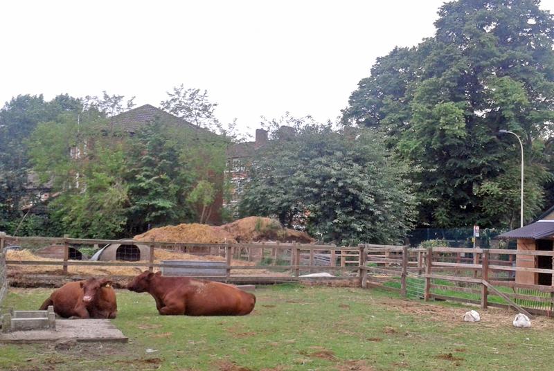 ferme-lodres-vache