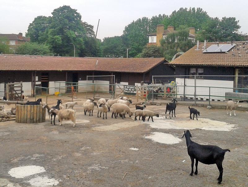 ferme-mouton-chevre-londres