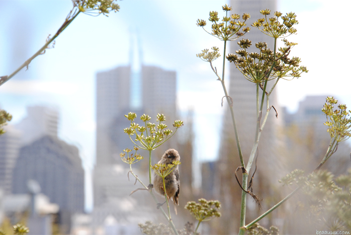 san-francisco-bird-flower-and-downtown-building-skyline