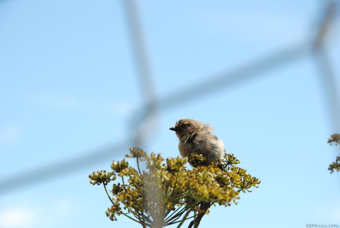 san-francisco-bird-flower-oiseau-fleur
