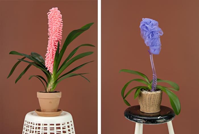sponge-plant-orchid-putput-photo-festival-jeune-photographie-europeenne-2014-1