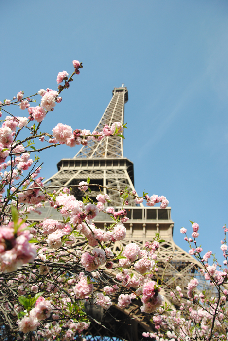 cherry-blossom-eiffel-tower-13