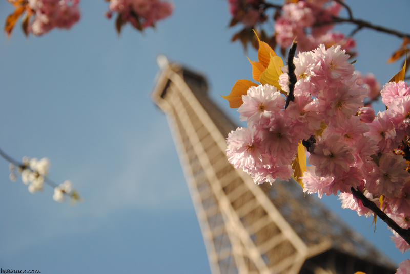 cherry-blossom-eiffel-tower-5