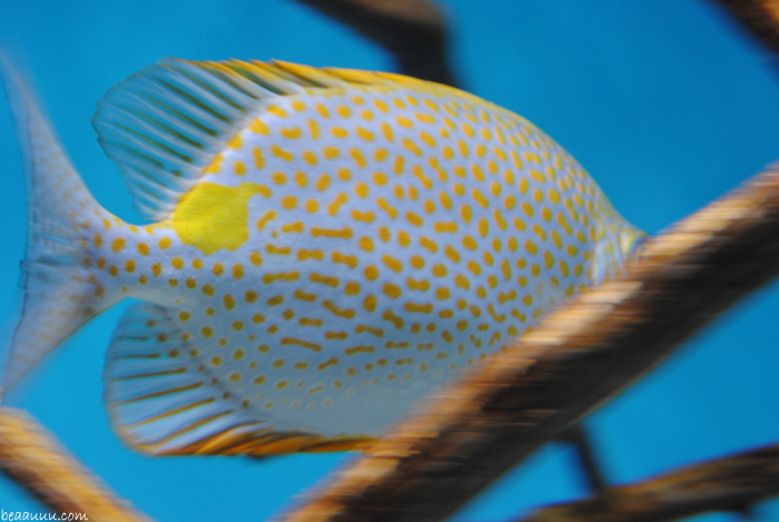 poisson-tropical-tropical-multicolor-fish