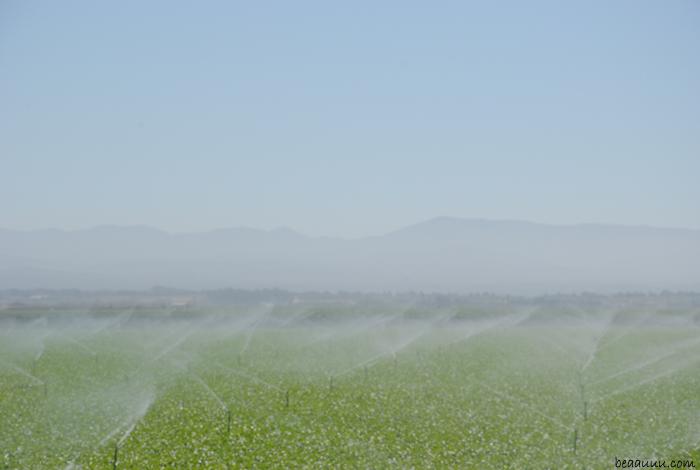 field-monterey-california-usa