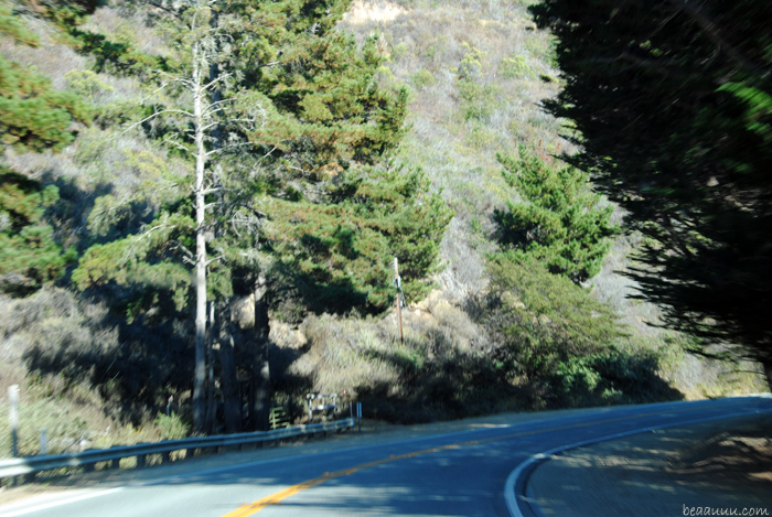 highway-1-big-sur-forest-usa-01