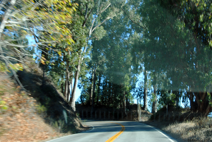 highway-1-big-sur-forest-usa-02