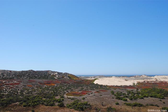 monterey-dune-sand-california