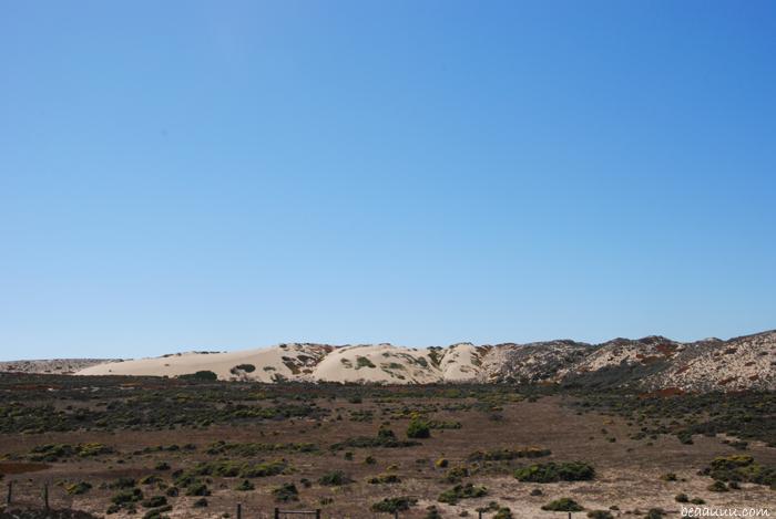 monterey-dune-sand-usa