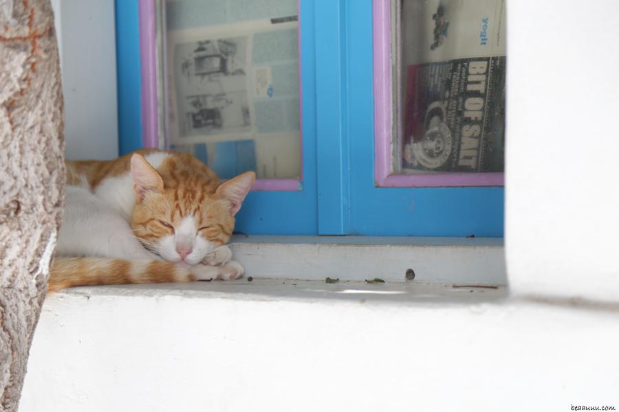 cat-sleeping-in-paros-greece