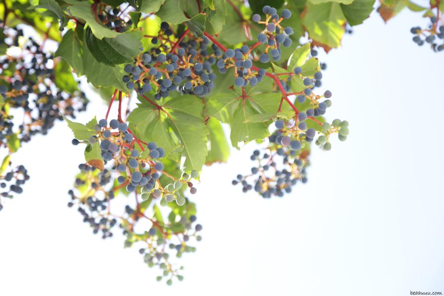 grapes-grappes-de-raisin-paros