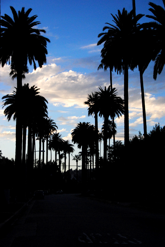 palm-tree-sunset-los-angeles