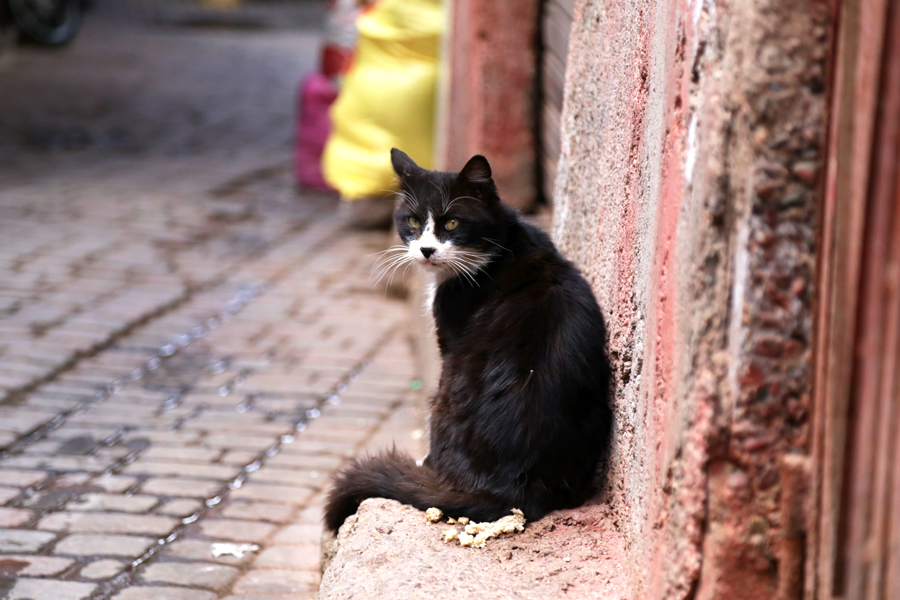 cat-marrakech