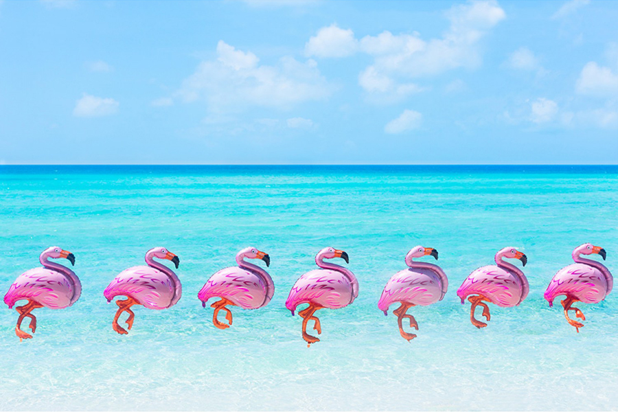 flamingos-gray-malin