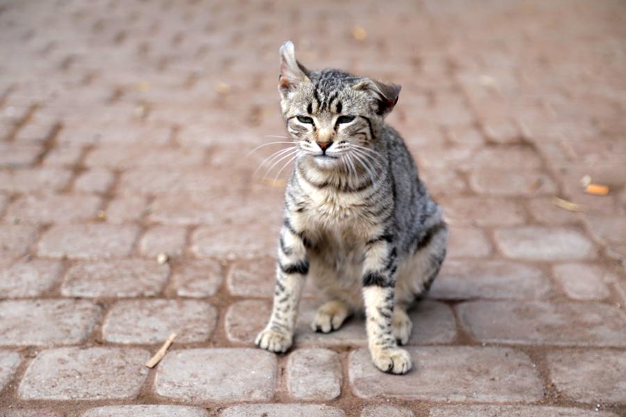 funny-kitten