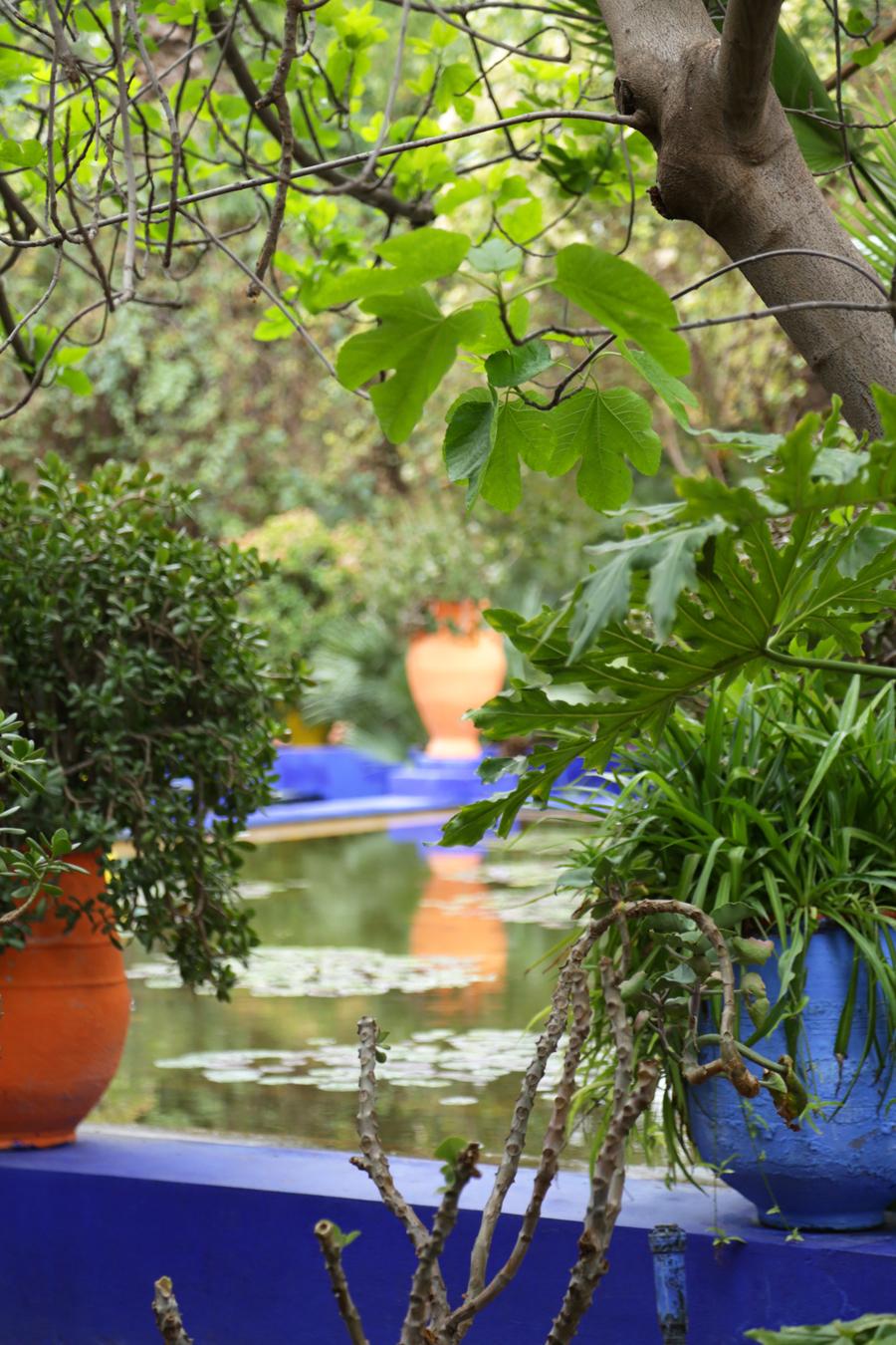 Le jardin majorelle blog mode tendance et lifestyle for Jardin majorelle