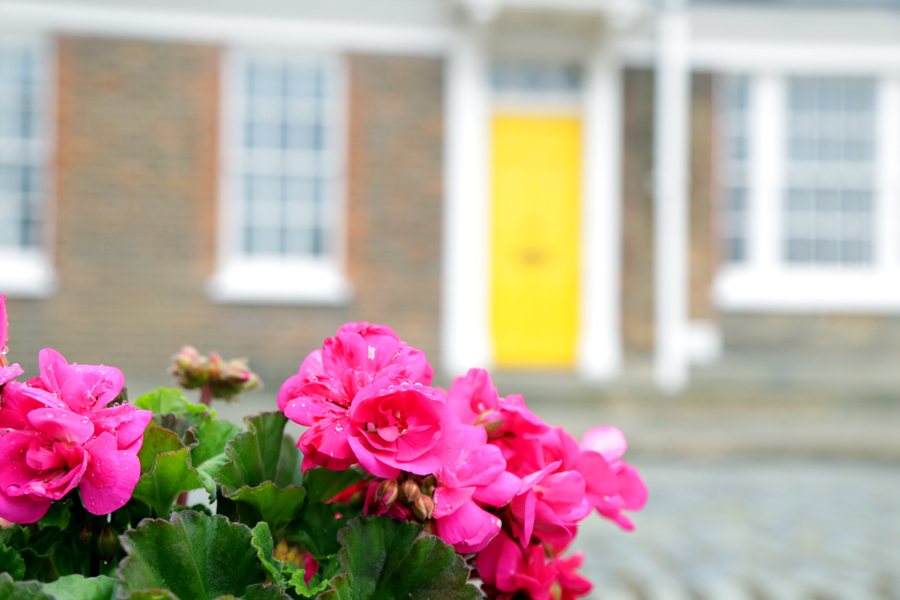flower-and-yellow-door