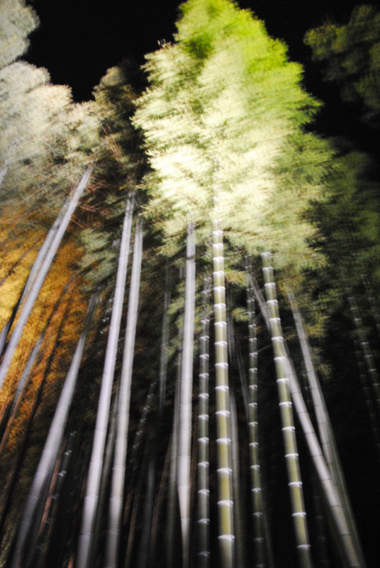 kyoto-bamboo-forest-japan
