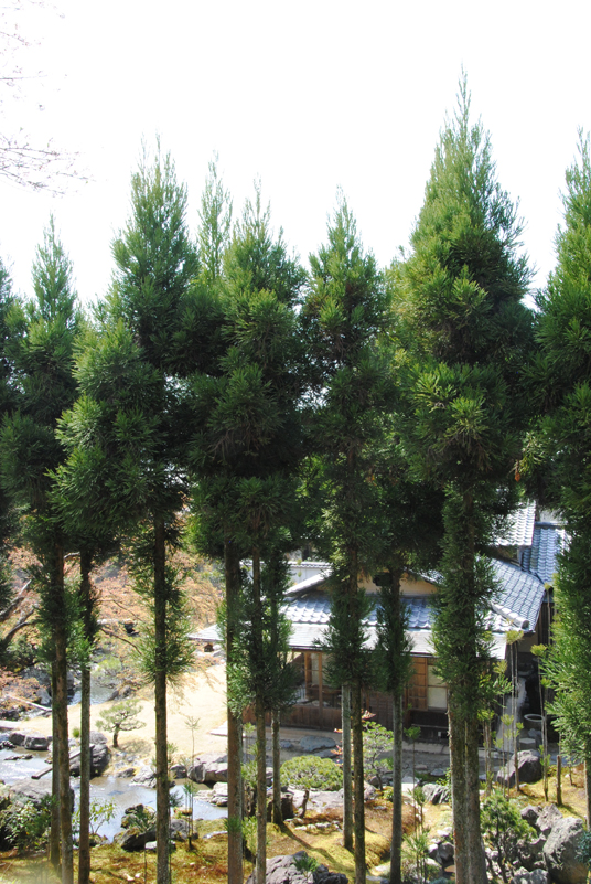 kyoto-home-surrounding-by-forest
