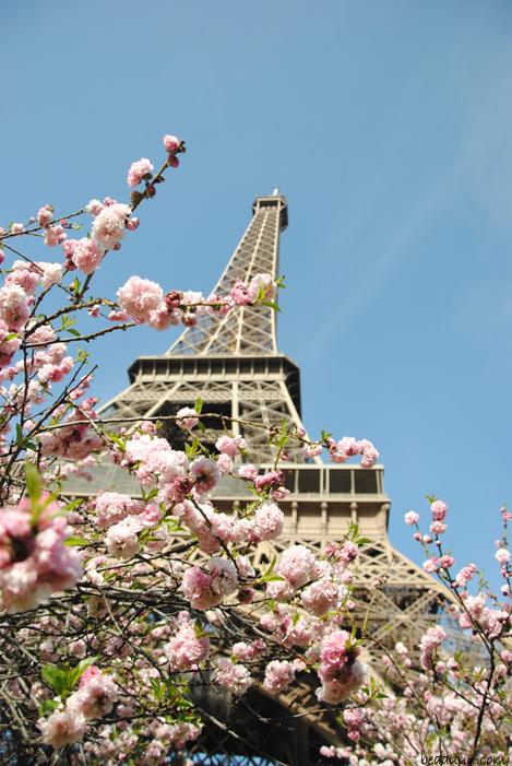 cherry-blossom-eiffel-tower-13