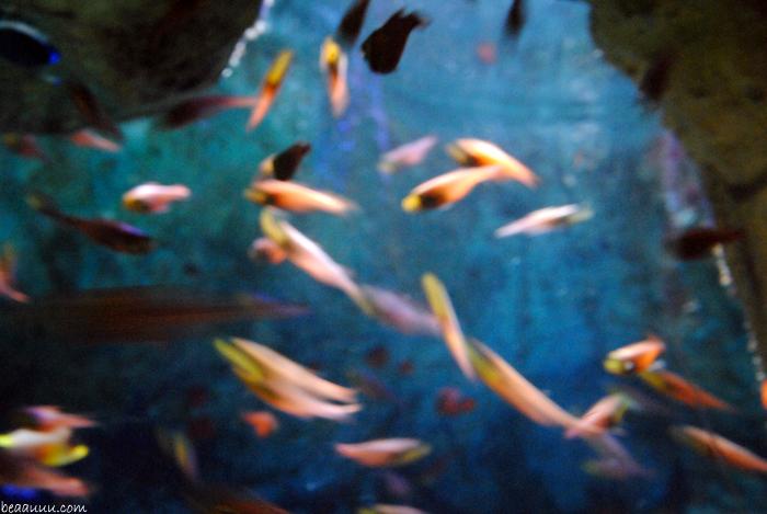 fish-poisson-tokyo-aquarium-poisson-tropical