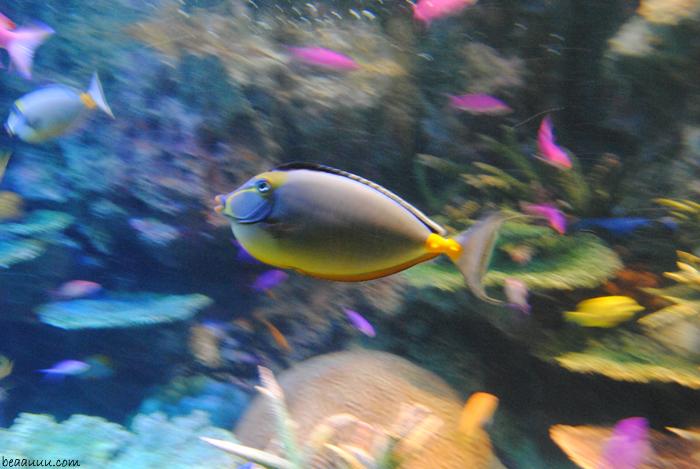 multicor-tropical-fish-poisson-poisson-tropical