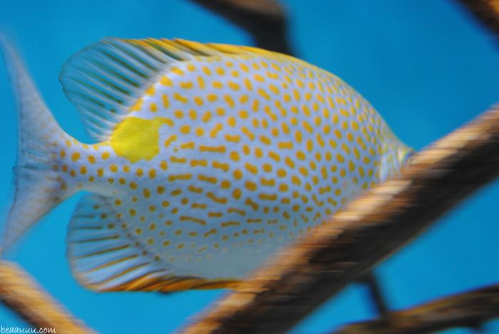 poisson-tropical-tropical-multicolor-fish