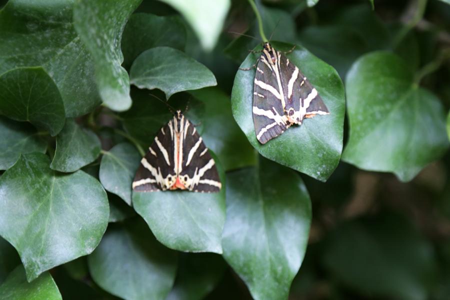 around-paros-papillon